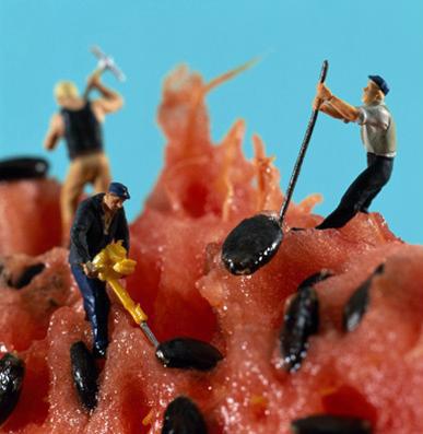 Melonenarbeiter