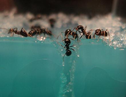 Ameisen am Eingang