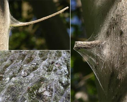 umsponnener Baum
