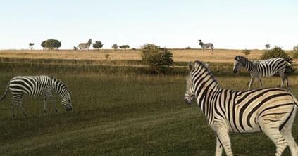 Ulmer Steppe mit Zebras