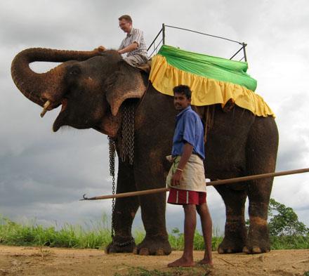 Don auf Elefant