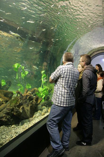 neues ulmer Aquarium