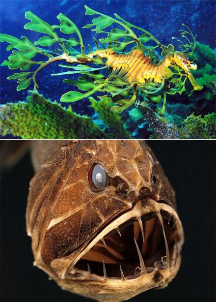zwei Unterwassertiere