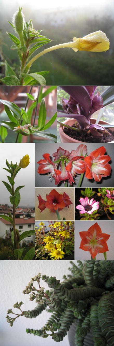 Blüten in der Wohung