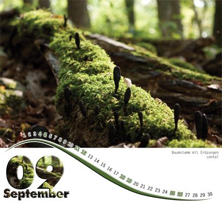 digitalender2010_september